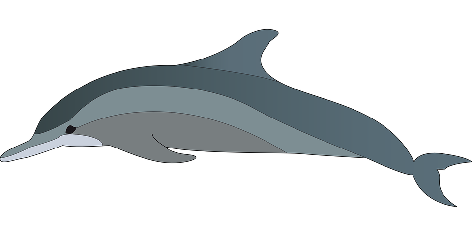 Bottlenose Dolphin clipart #5, Download drawings