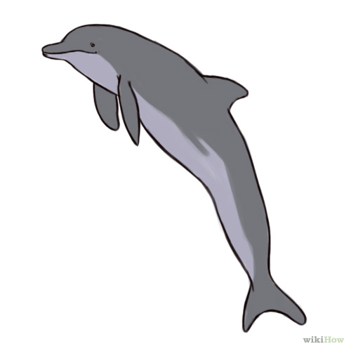 Bottlenose Dolphin clipart #19, Download drawings