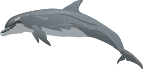 Bottlenose Dolphin clipart #14, Download drawings