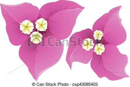 Bougainvillea clipart #20, Download drawings