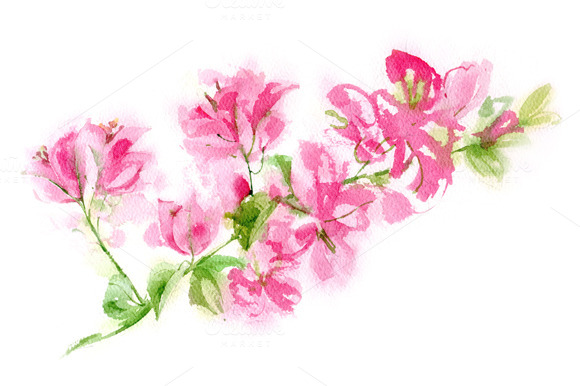 Bougainvillea clipart #7, Download drawings