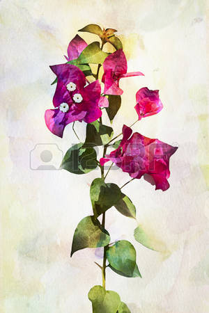 Bougainvillea clipart #6, Download drawings