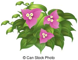 Bougainvillea clipart #19, Download drawings