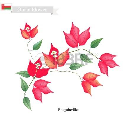 Bougainvillea clipart #11, Download drawings