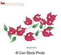 Bougainvillea clipart #3, Download drawings