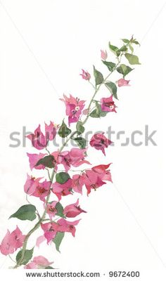 Bougainvillea svg #2, Download drawings