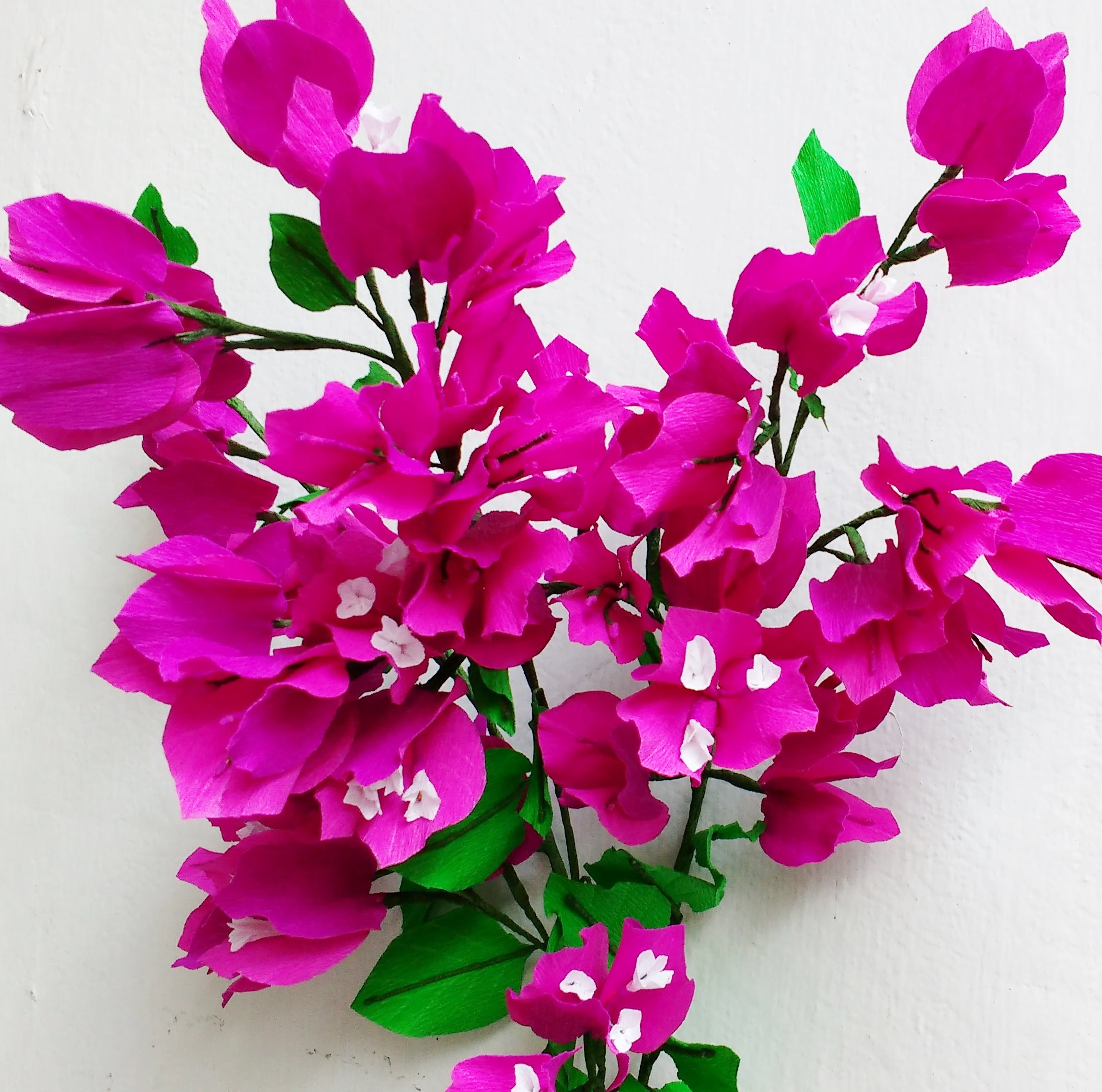 Bougainvillea svg #13, Download drawings