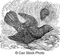 Bowerbird clipart #16, Download drawings
