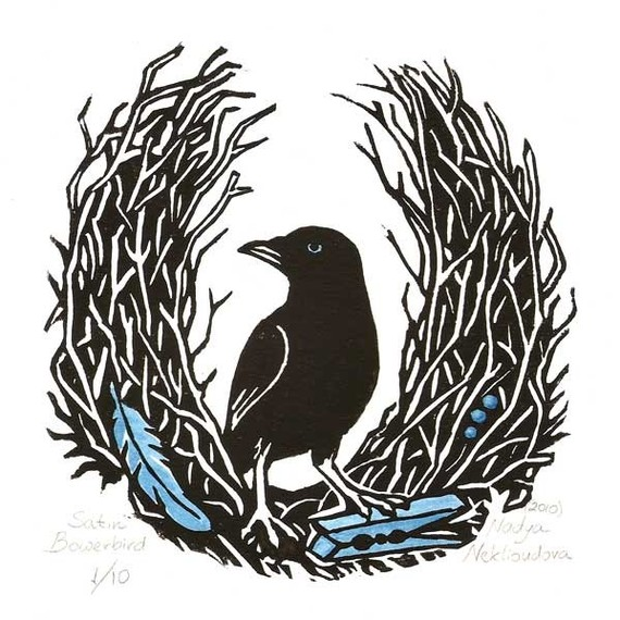 Bowerbird clipart #19, Download drawings