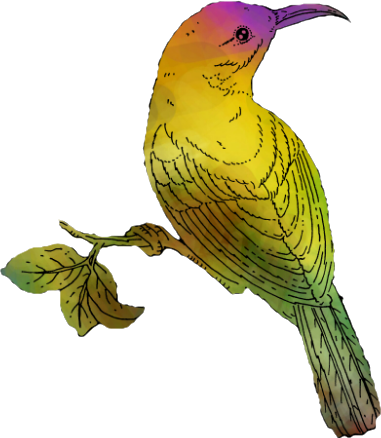 Bowerbird clipart #17, Download drawings