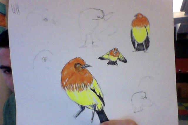 Bowerbird svg #17, Download drawings