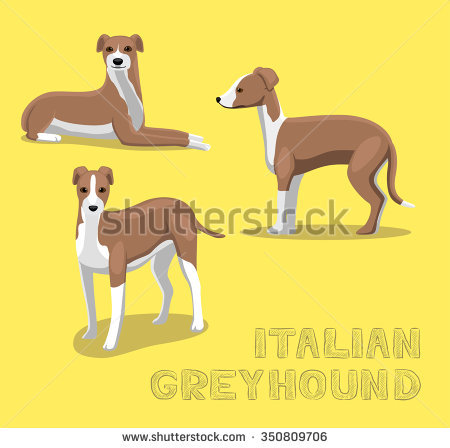 Bracco Italiano clipart #1, Download drawings