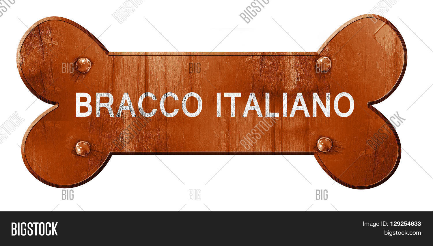 Bracco Italiano clipart #8, Download drawings