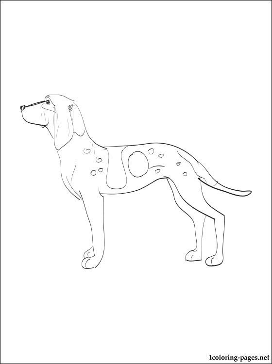 Bracco Italiano coloring #10, Download drawings