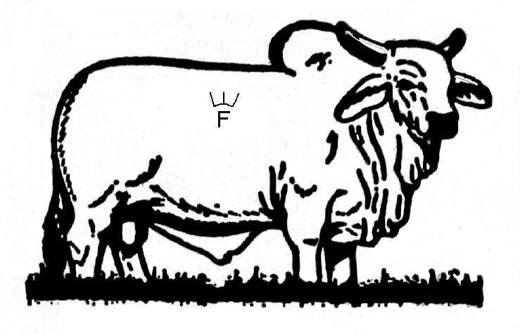 Brahman Bull clipart #18, Download drawings