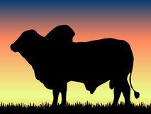Brahman Bull clipart #1, Download drawings