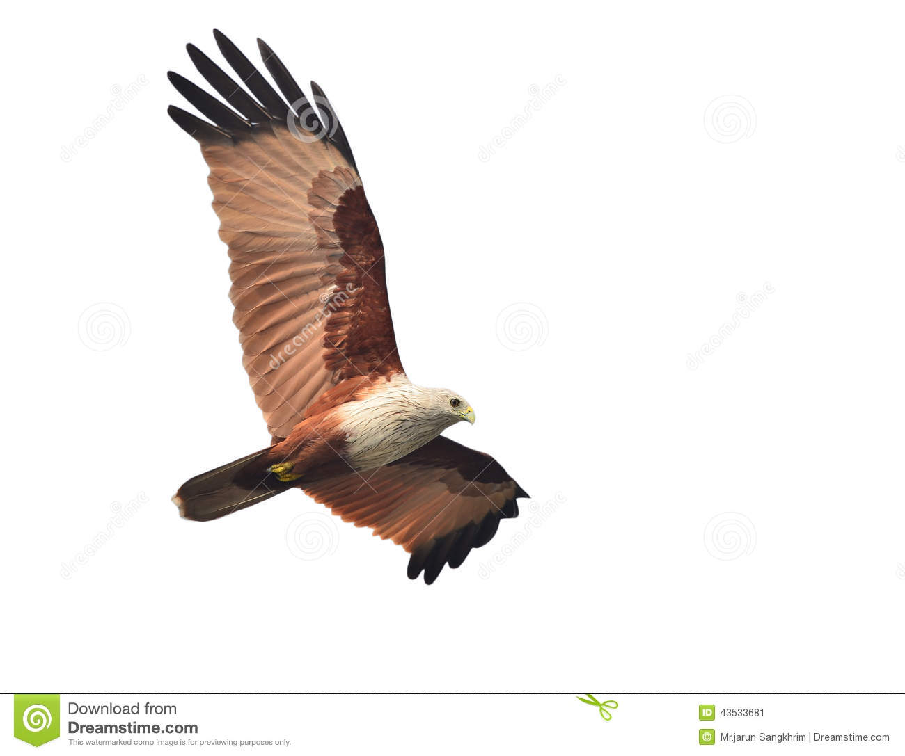 Brahminy Kite clipart #16, Download drawings