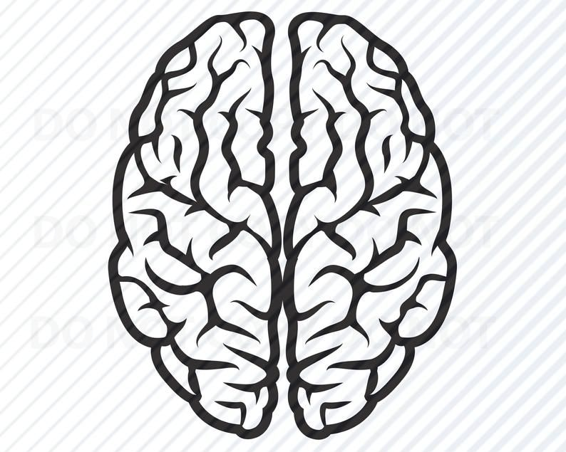 brain svg #1195, Download drawings