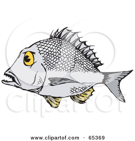 Bream clipart #15, Download drawings