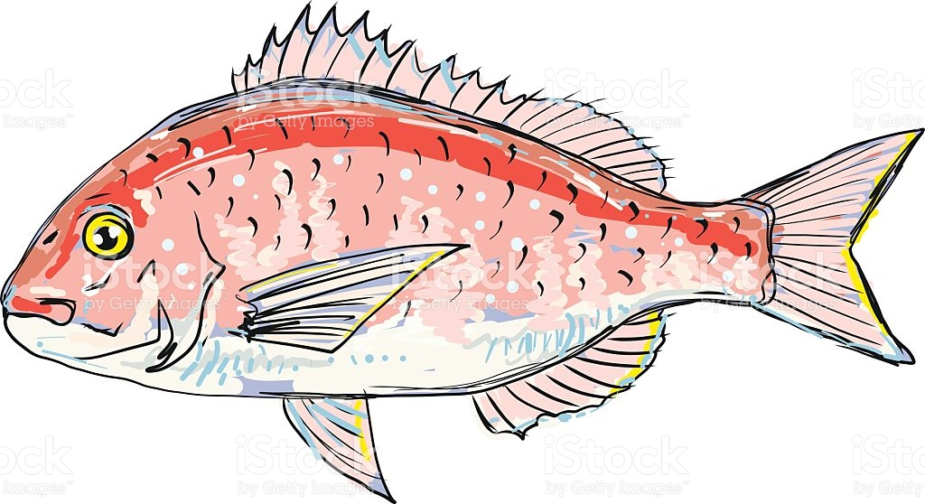 Bream clipart #7, Download drawings