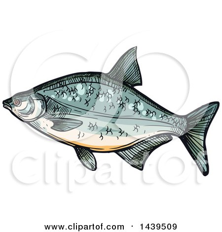 Bream clipart #14, Download drawings