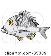 Bream clipart #19, Download drawings