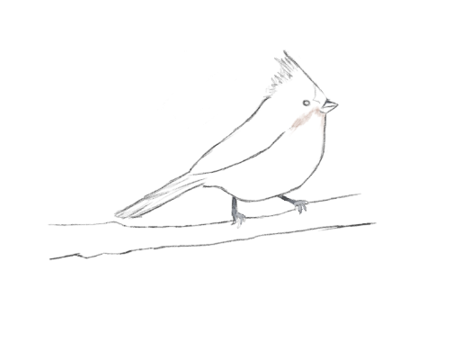 Bridled Titmouse clipart #20, Download drawings