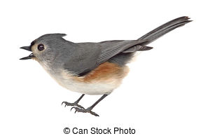 Bridled Titmouse clipart #15, Download drawings