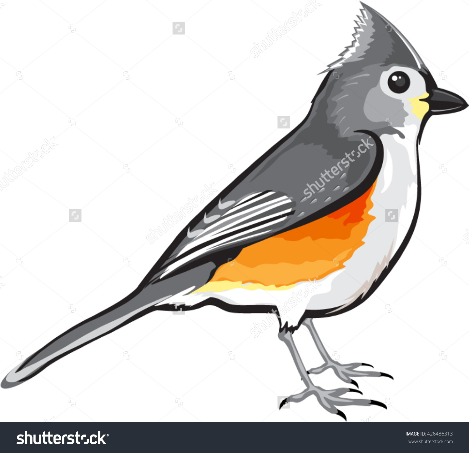 Bridled Titmouse clipart #19, Download drawings