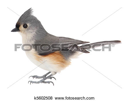 Bridled Titmouse clipart #11, Download drawings