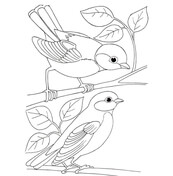 Bridled Titmouse coloring #13, Download drawings