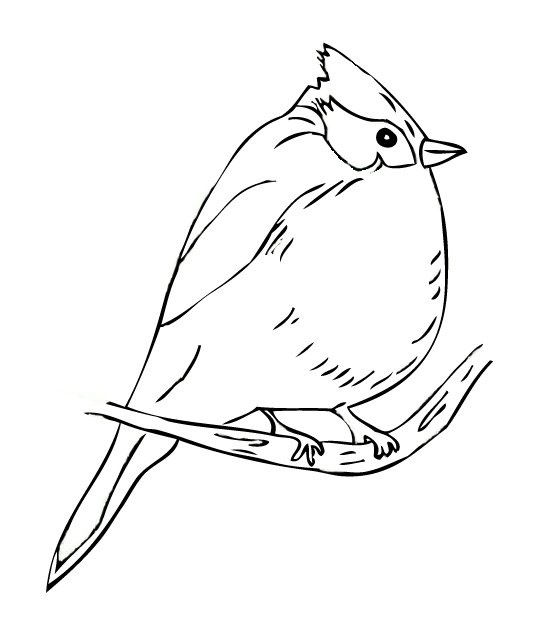 Titmouse coloring #10, Download drawings