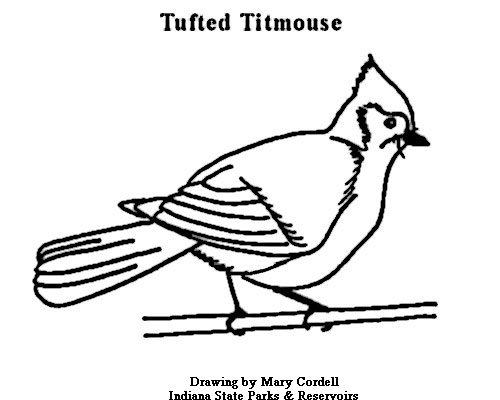 Bridled Titmouse coloring #7, Download drawings