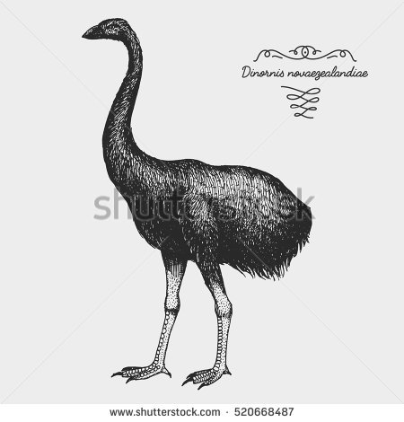 Broad-billed Moa clipart #12, Download drawings