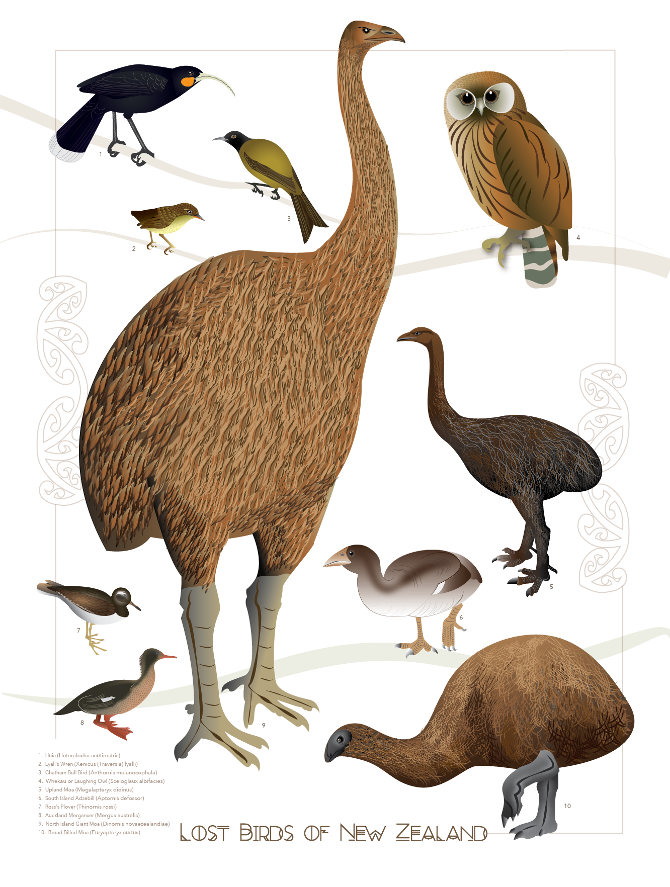 Broad-billed Moa clipart #4, Download drawings