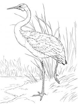 Brolga clipart #18, Download drawings