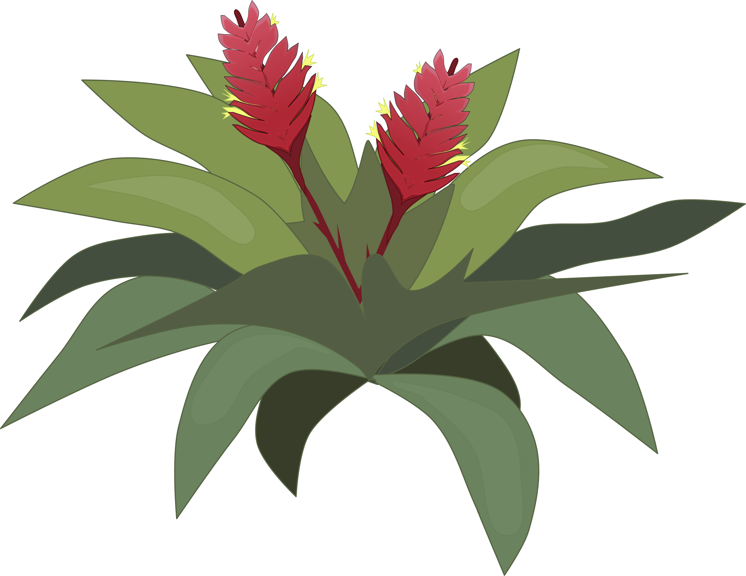 Bromelia clipart #10, Download drawings