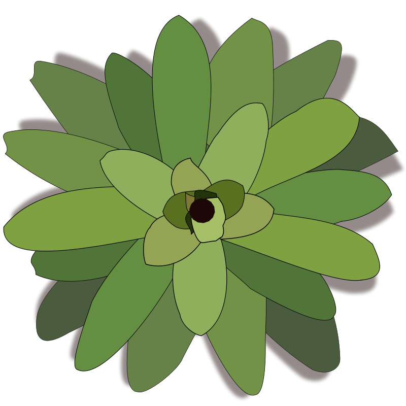 Bromelia clipart #4, Download drawings