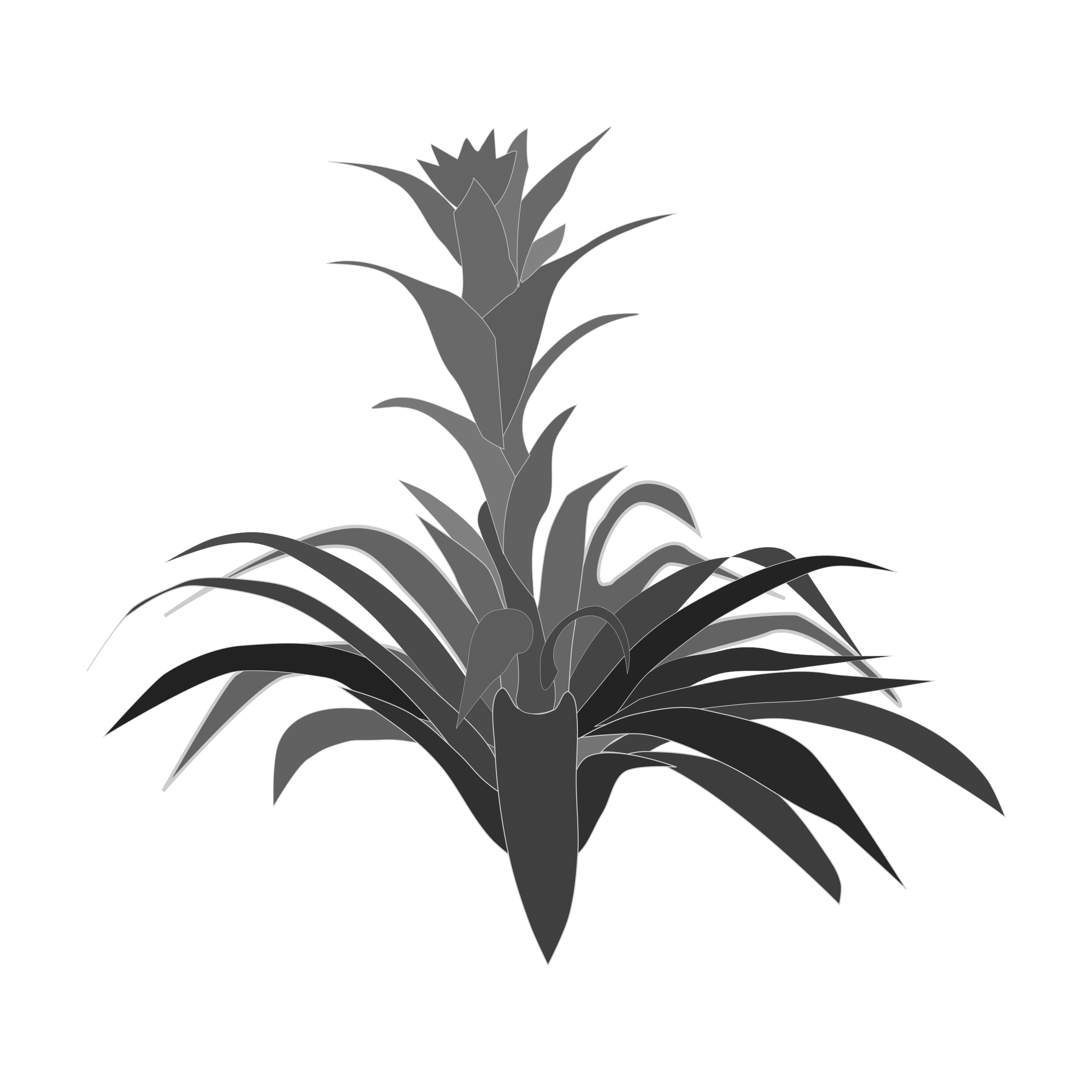 Bromelia clipart #5, Download drawings