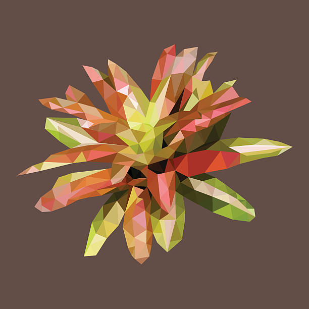 Bromelia clipart #16, Download drawings