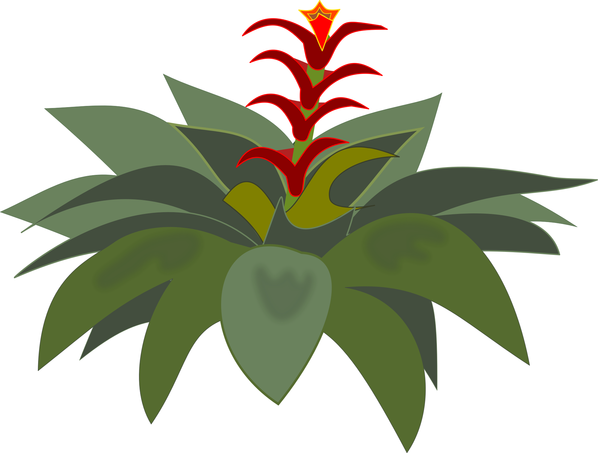 Bromelia clipart #14, Download drawings