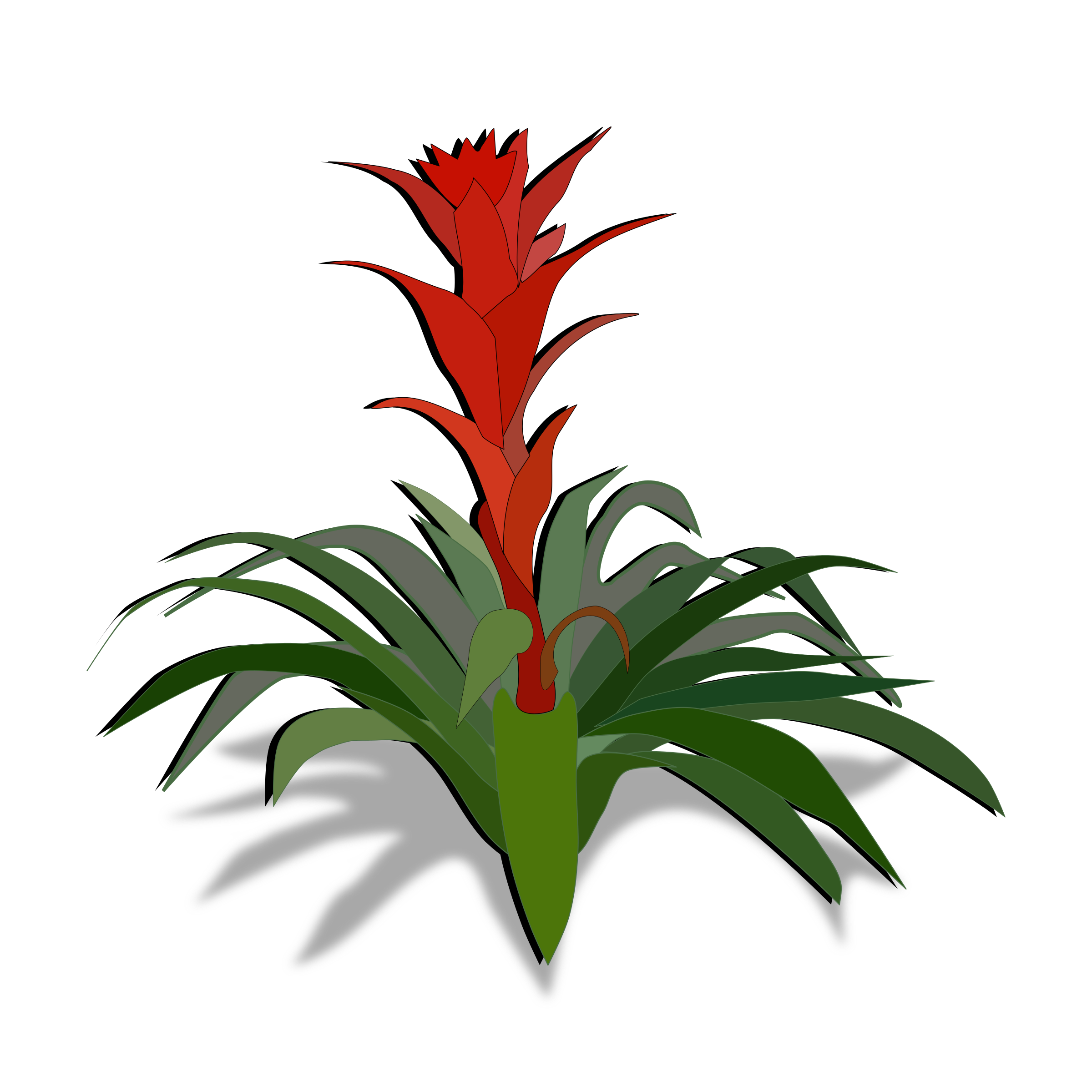 Bromelia clipart #8, Download drawings