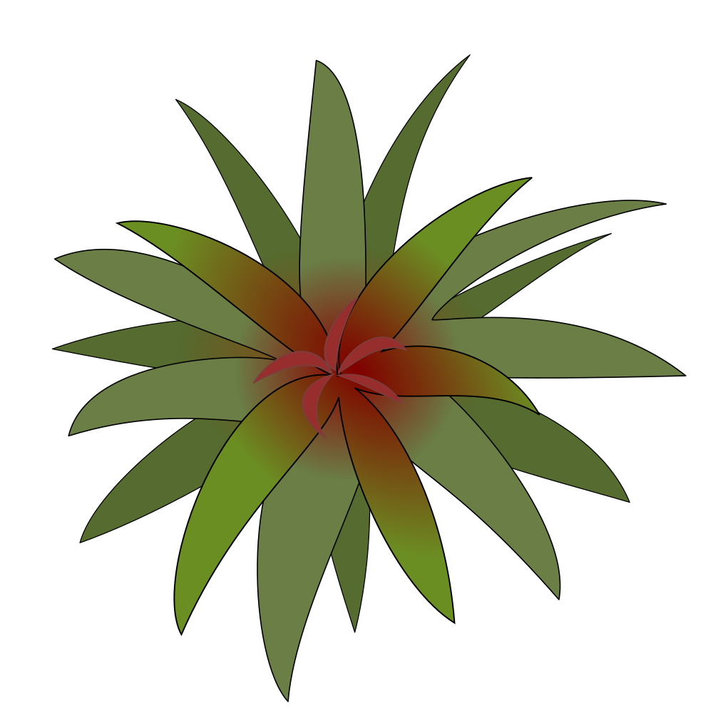 Bromelia clipart #19, Download drawings