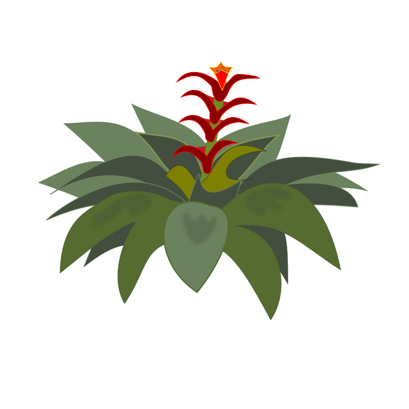Bromelia clipart #12, Download drawings