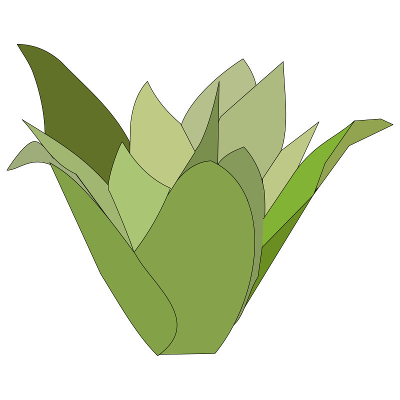 Bromelia clipart #18, Download drawings