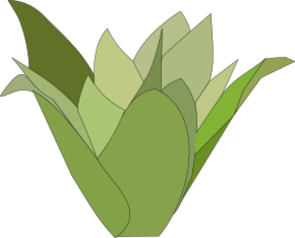 Bromelia svg #8, Download drawings
