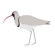 Tailorbird svg #3, Download drawings