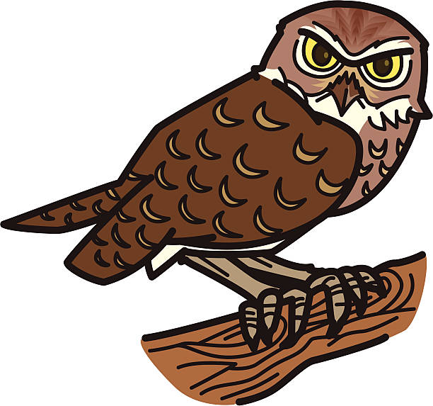 Burrowing Owl clipart #1, Download drawings