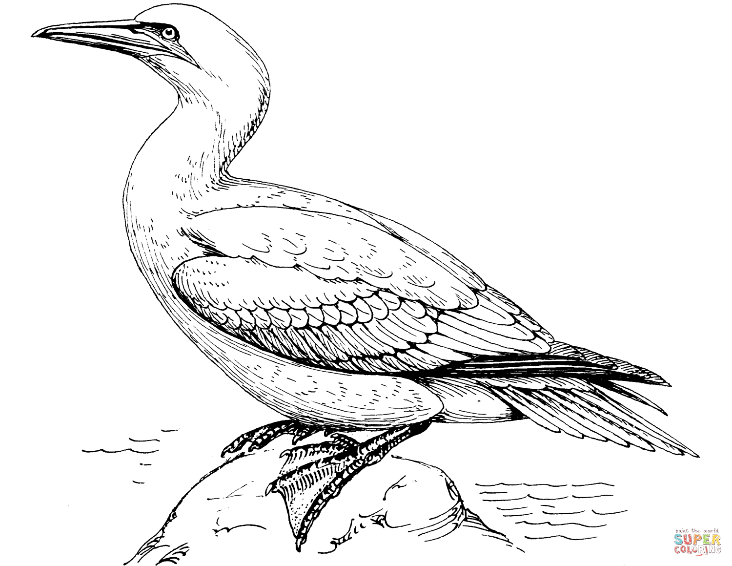 Northern Gannet coloring #14, Download drawings