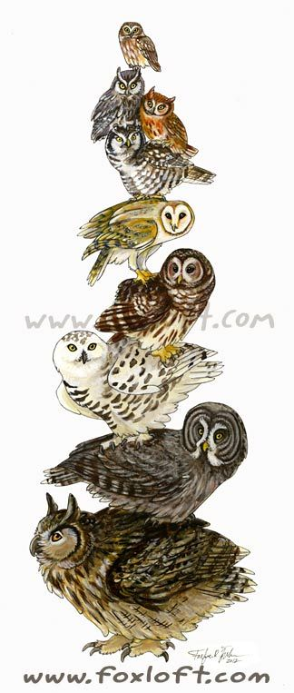 Great Gray Owl svg #4, Download drawings